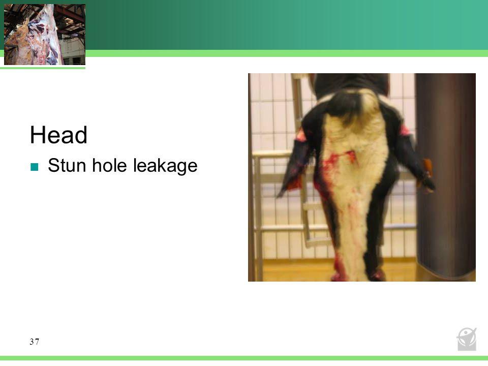 Head Stun hole leakage 37