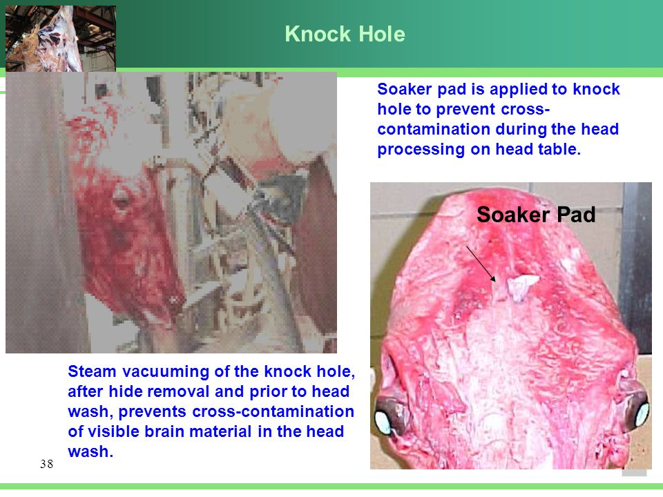 Knock Hole Soaker pad is applied to knock hole to prevent cross-contamination during the head processing on head table.