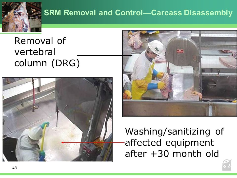 SRM Removal and Control—Carcass Disassembly