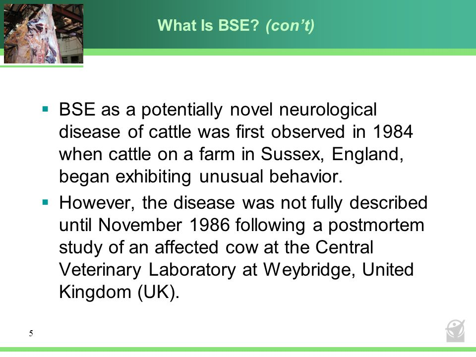 What Is BSE (con't)