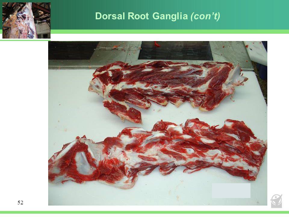 Dorsal Root Ganglia (con't)