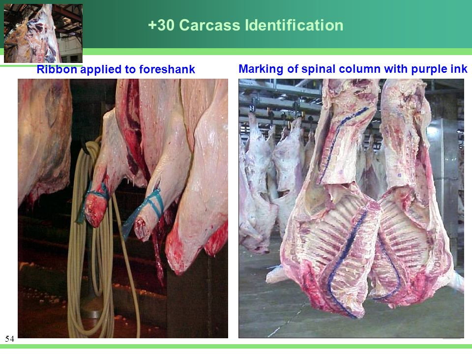 +30 Carcass Identification