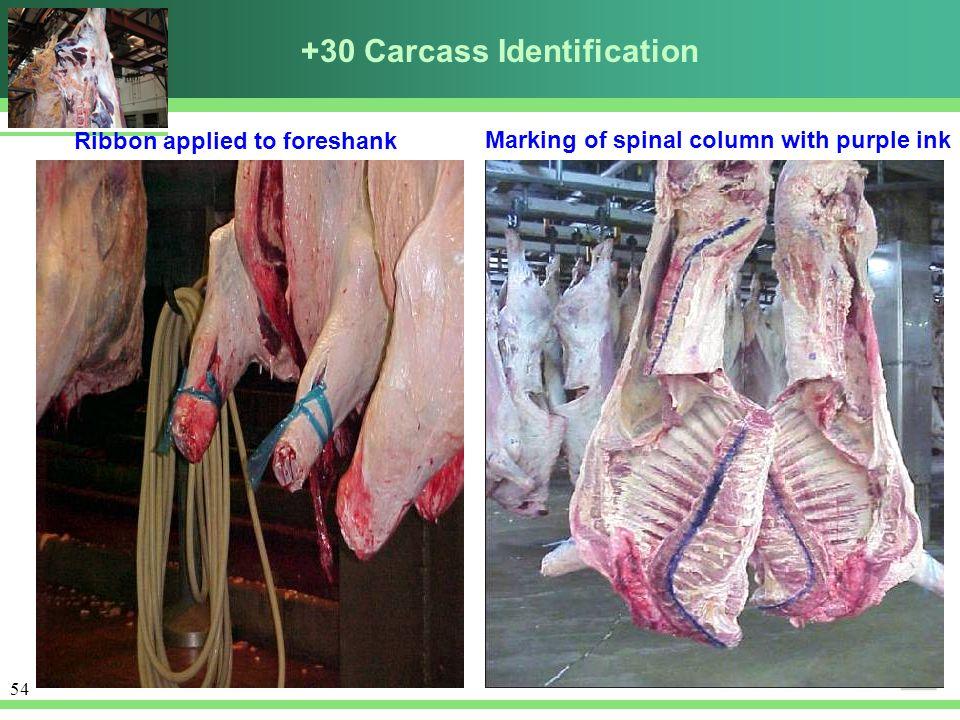 +30 Carcass Identification
