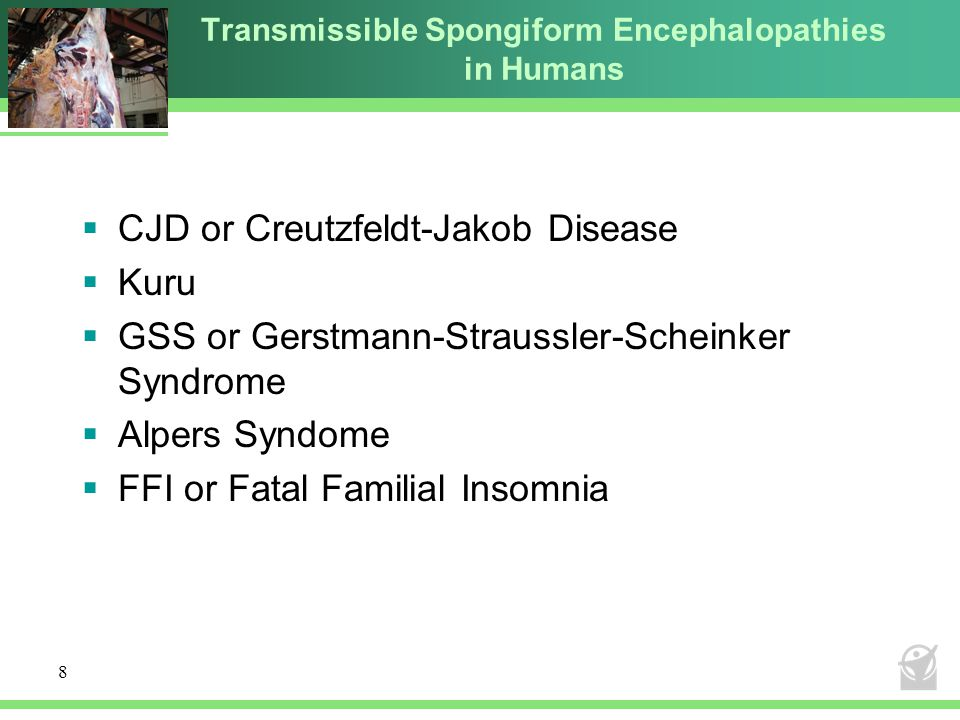 Transmissible Spongiform Encephalopathies in Humans