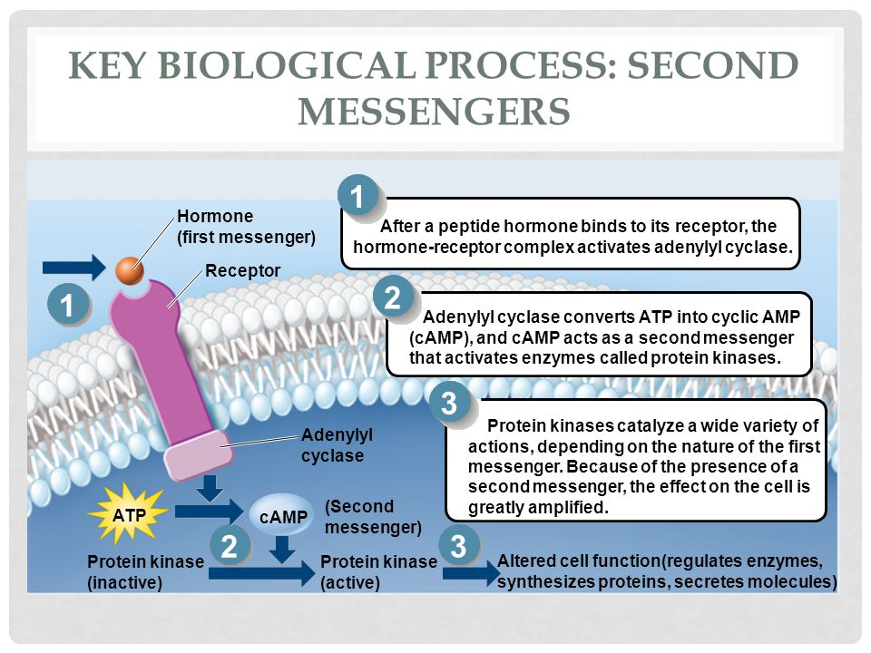 Key Biological Process: Second messengers