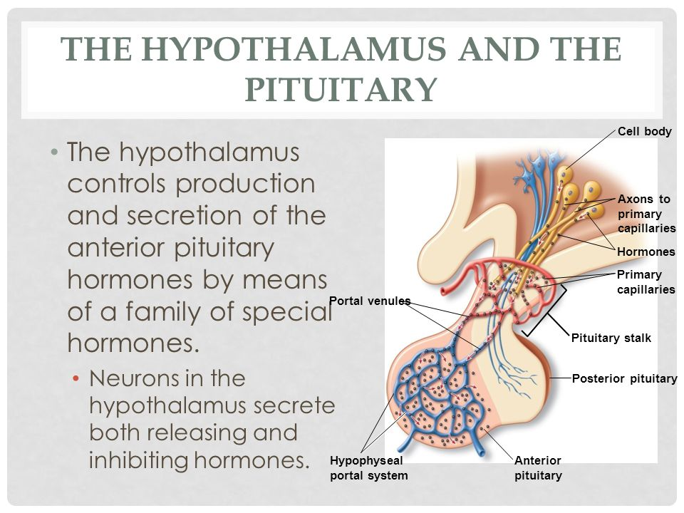 The Hypothalamus and the Pituitary