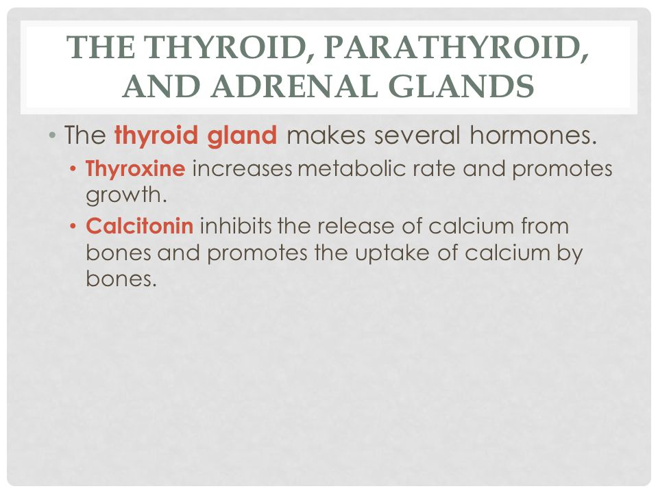 The Thyroid, Parathyroid, and Adrenal Glands