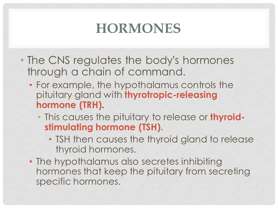 Hormones The CNS regulates the body's hormones through a chain of command.