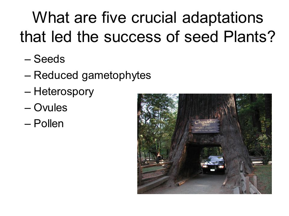 What are five crucial adaptations that led the success of seed Plants
