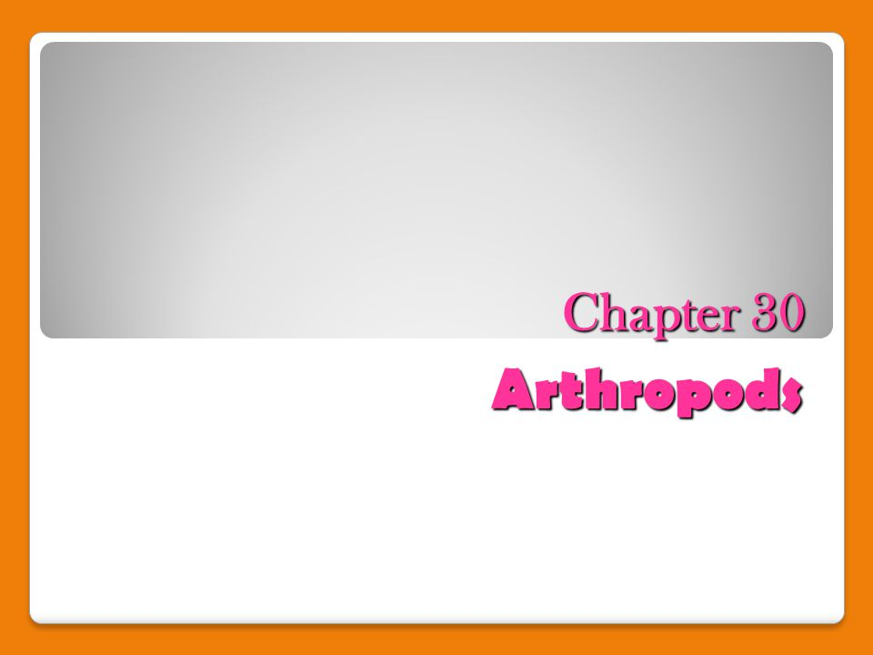 Chapter 30 Arthropods