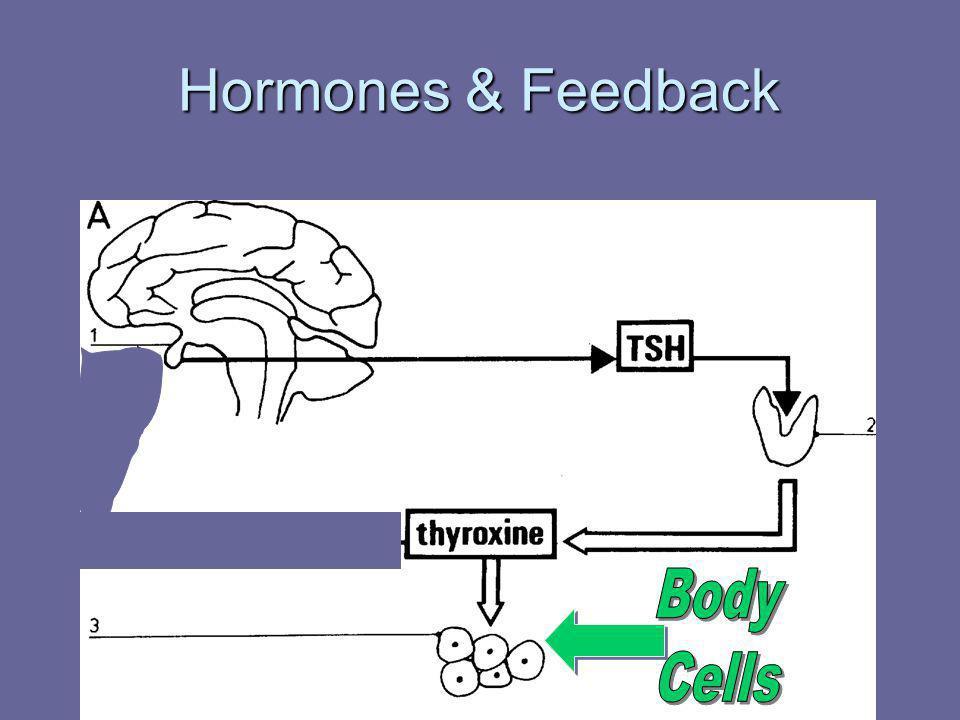Hormones & Feedback Body Cells