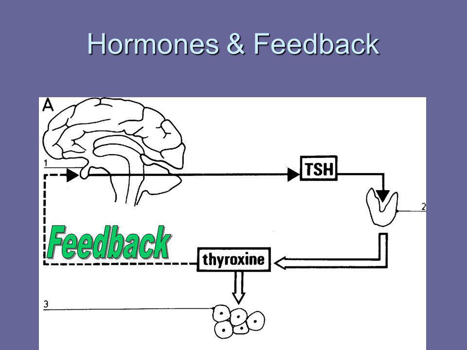Hormones & Feedback Feedback