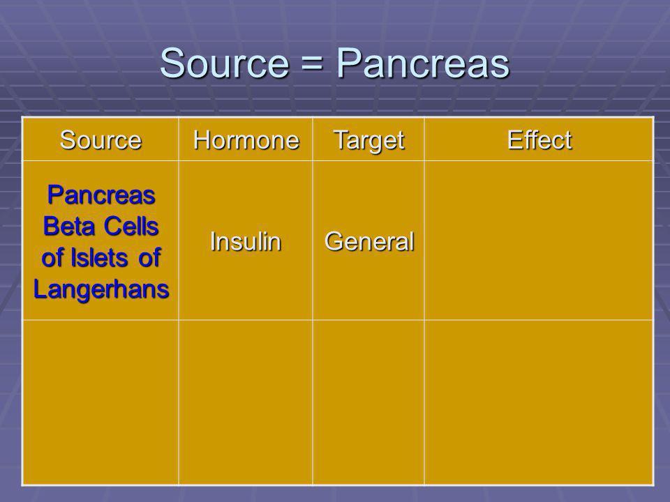 Pancreas Beta Cells of Islets of Langerhans