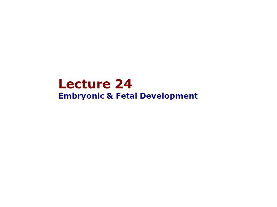 Lecture 24 Embryonic & Fetal Development