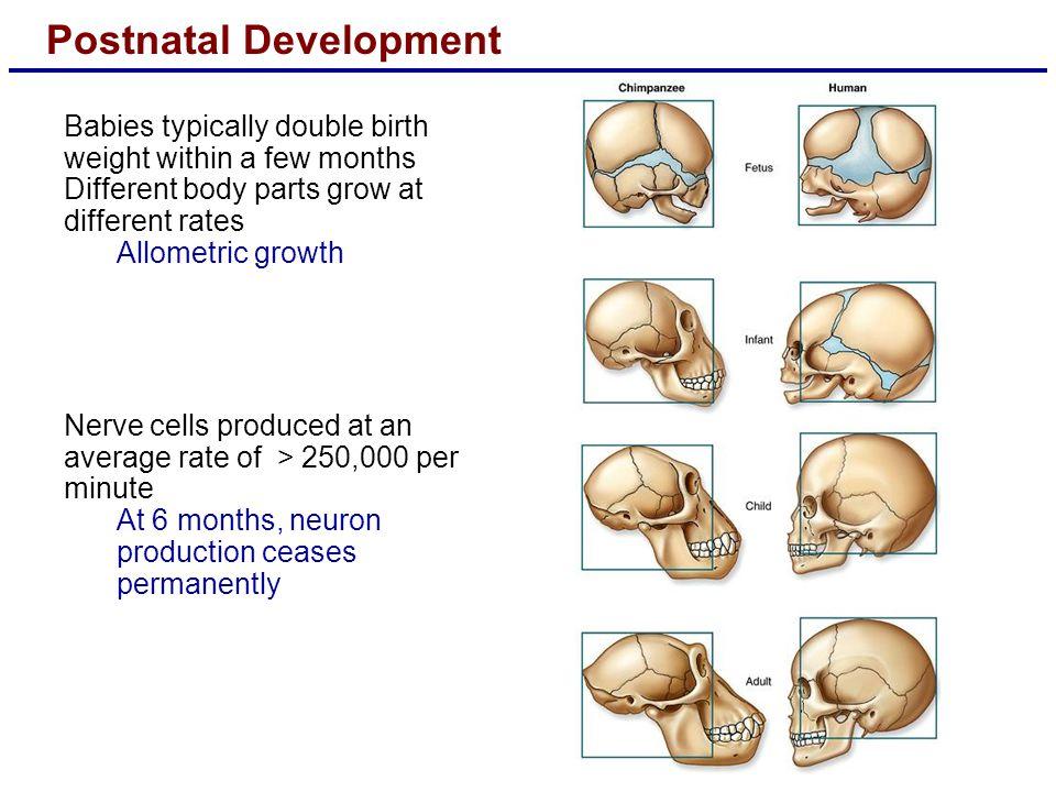 Postnatal Development