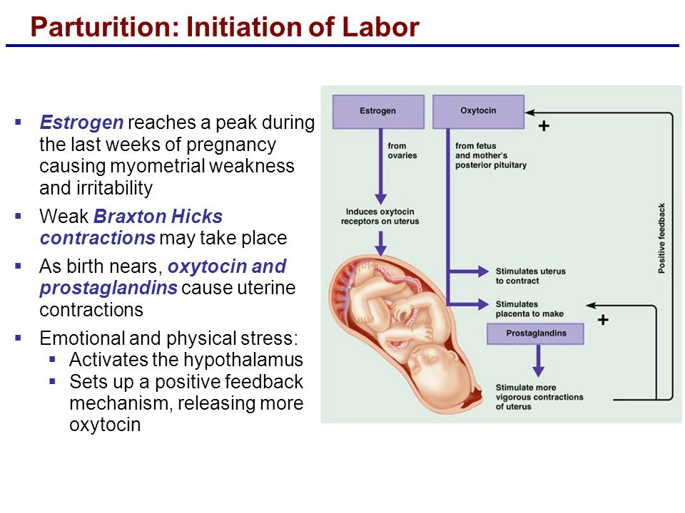 Parturition: Initiation of Labor