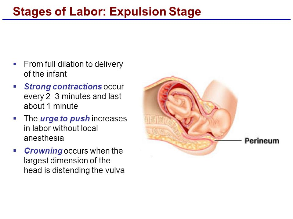 Stages of Labor: Expulsion Stage