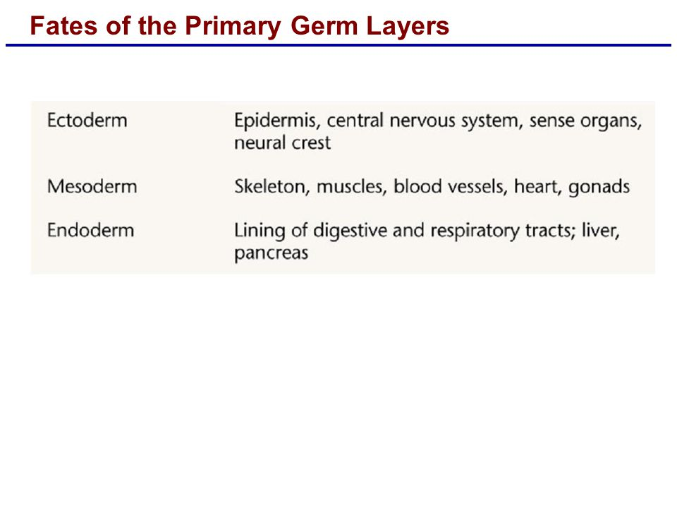 Fates of the Primary Germ Layers