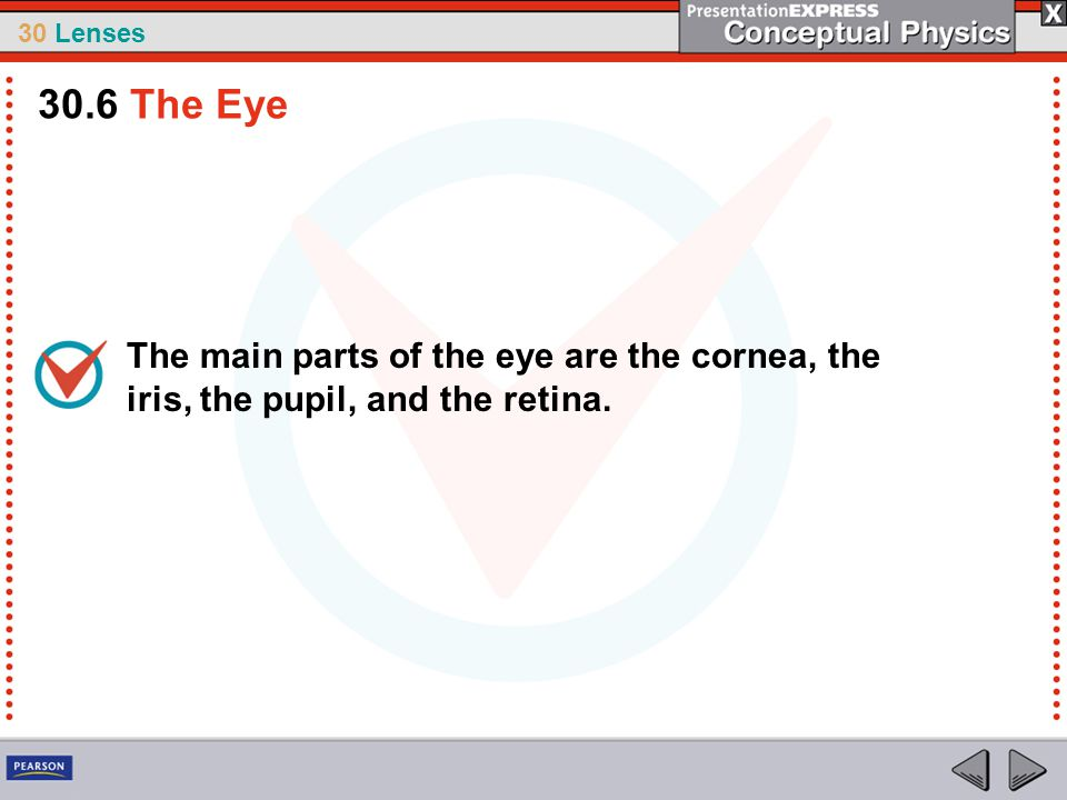30.6 The Eye The main parts of the eye are the cornea, the iris, the pupil, and the retina.