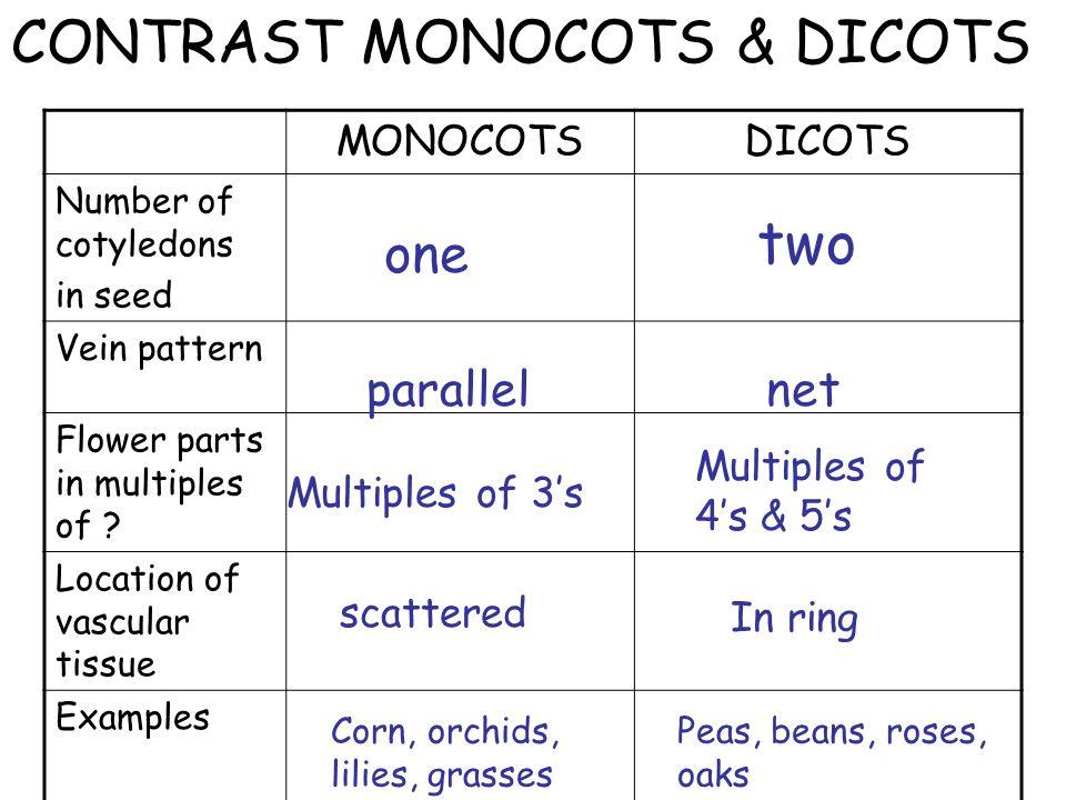 CONTRAST MONOCOTS & DICOTS