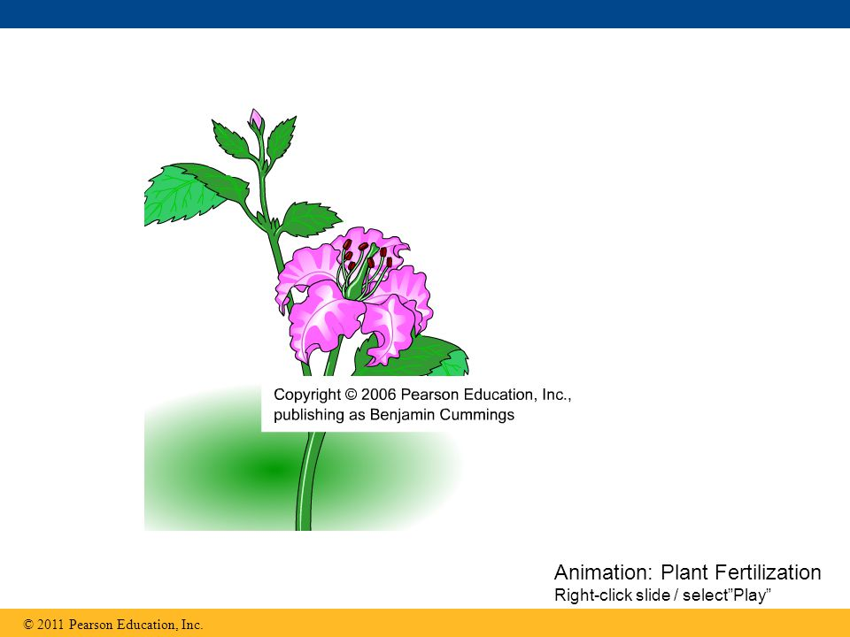 Animation: Plant Fertilization Right-click slide / select Play