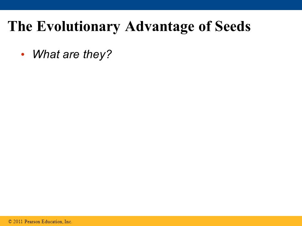 The Evolutionary Advantage of Seeds