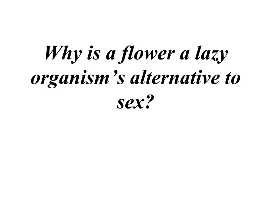 Why is a flower a lazy organism's alternative to sex