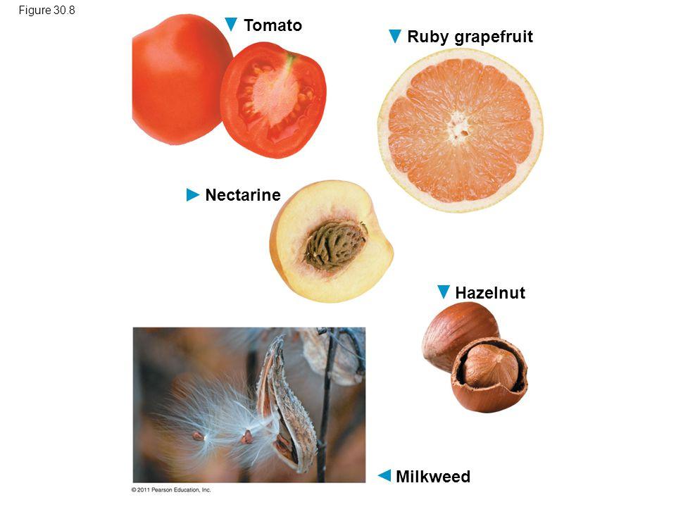 Tomato Ruby grapefruit Nectarine Hazelnut Milkweed Figure 30.8
