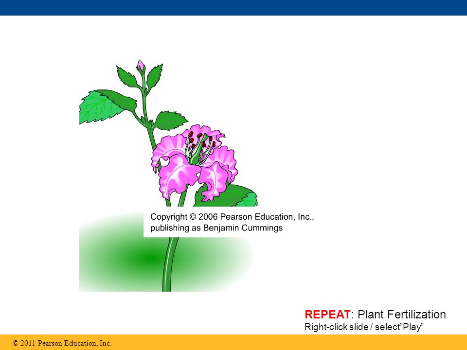 REPEAT: Plant Fertilization Right-click slide / select Play