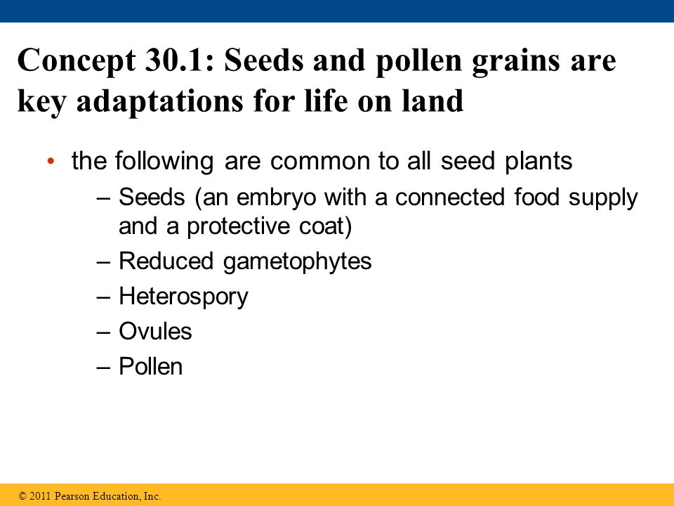 Concept 30.1: Seeds and pollen grains are key adaptations for life on land