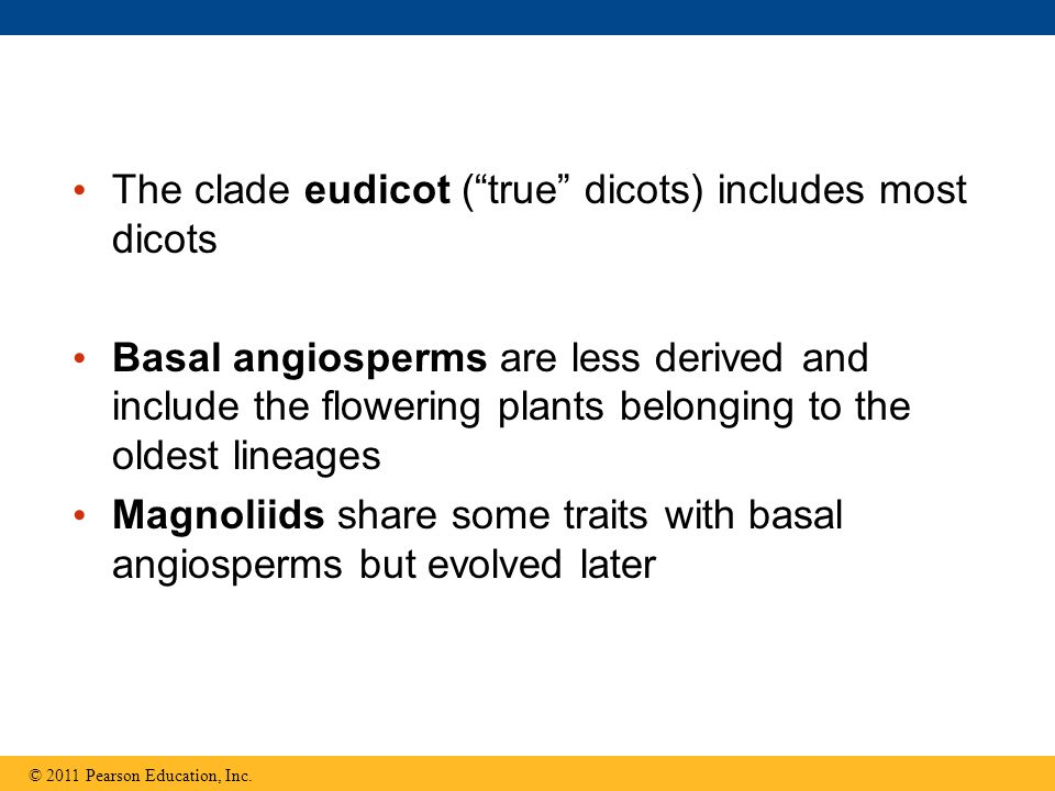 The clade eudicot ( true dicots) includes most dicots