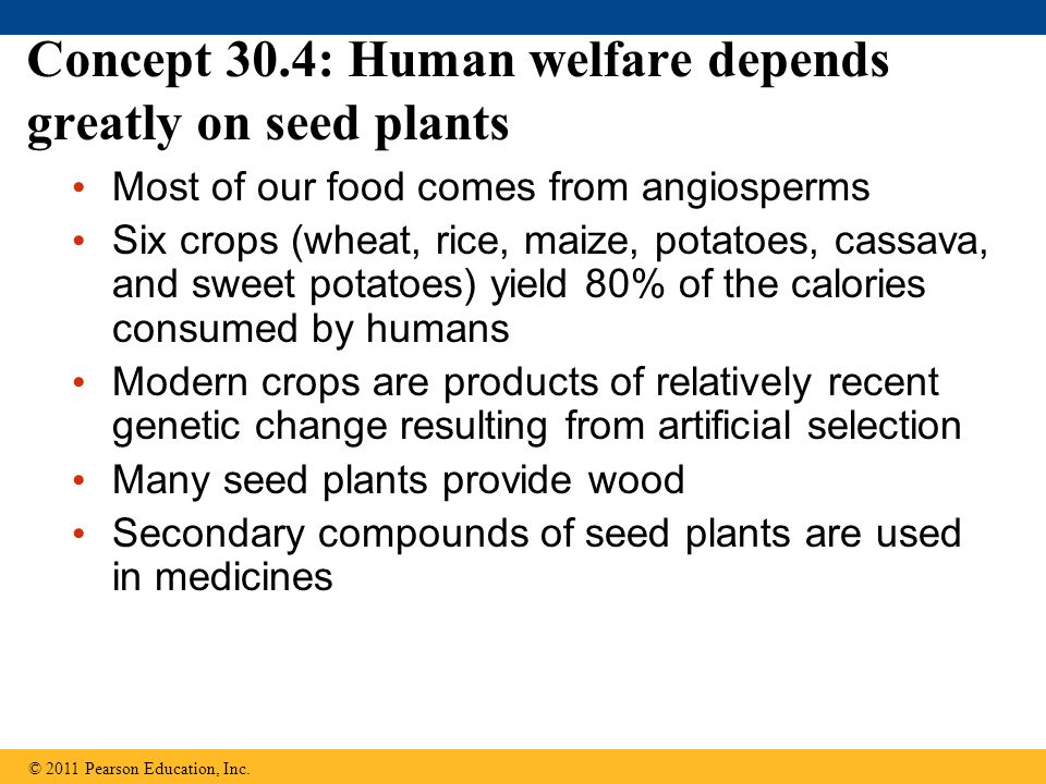 Concept 30.4: Human welfare depends greatly on seed plants