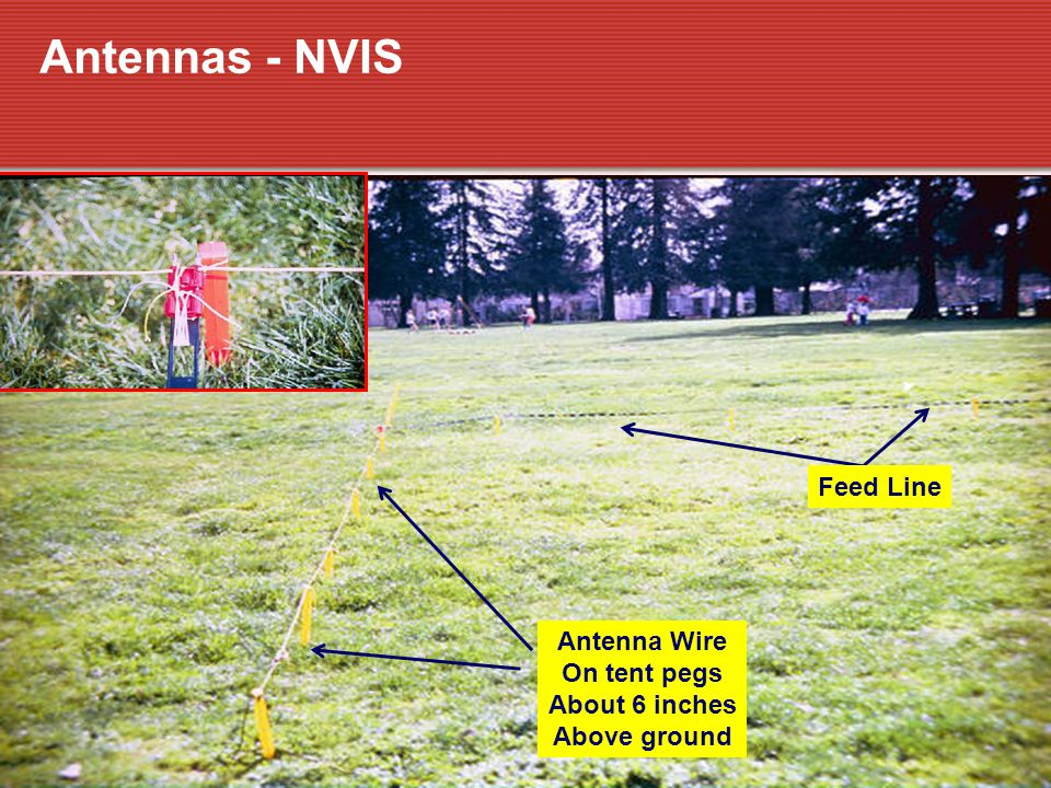 Antennas - NVIS Feed Line Antenna Wire On tent pegs About 6 inches