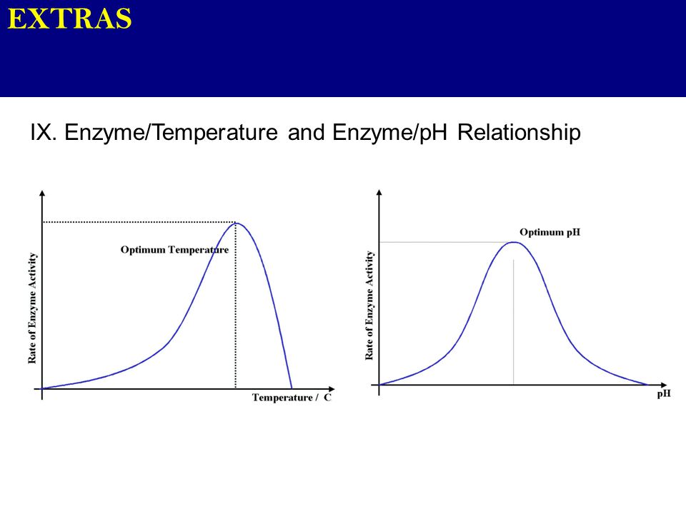 EXTRAS IX. Enzyme/Temperature and Enzyme/pH Relationship