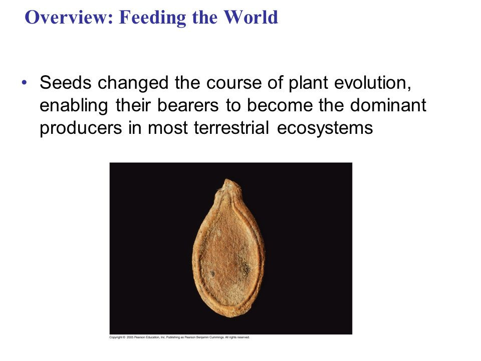 Overview: Feeding the World