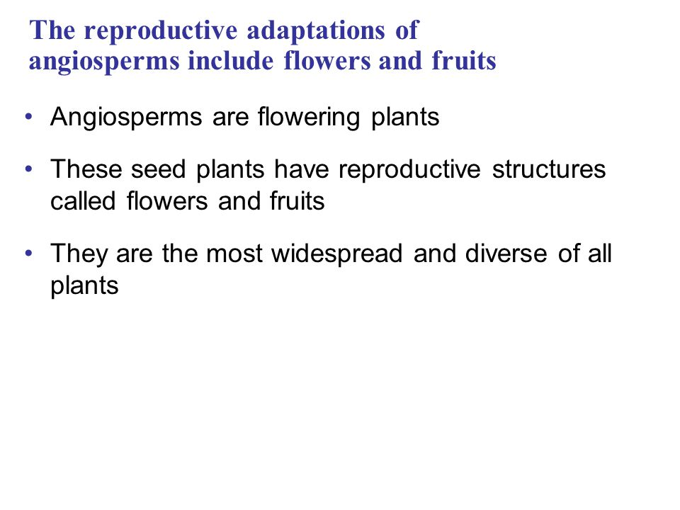 The reproductive adaptations of angiosperms include flowers and fruits