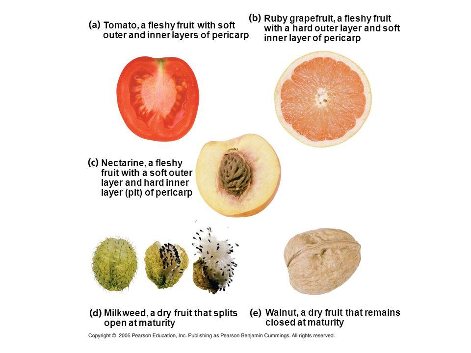 Ruby grapefruit, a fleshy fruit