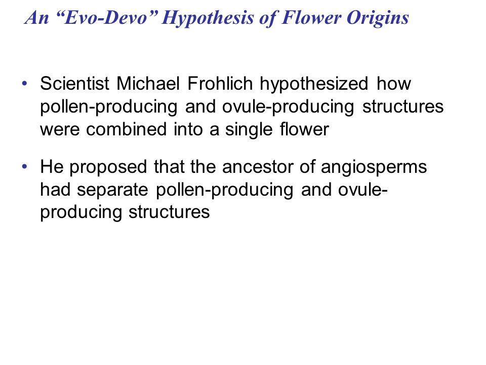 An Evo-Devo Hypothesis of Flower Origins