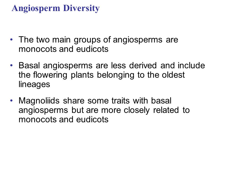 Angiosperm Diversity The two main groups of angiosperms are monocots and eudicots.