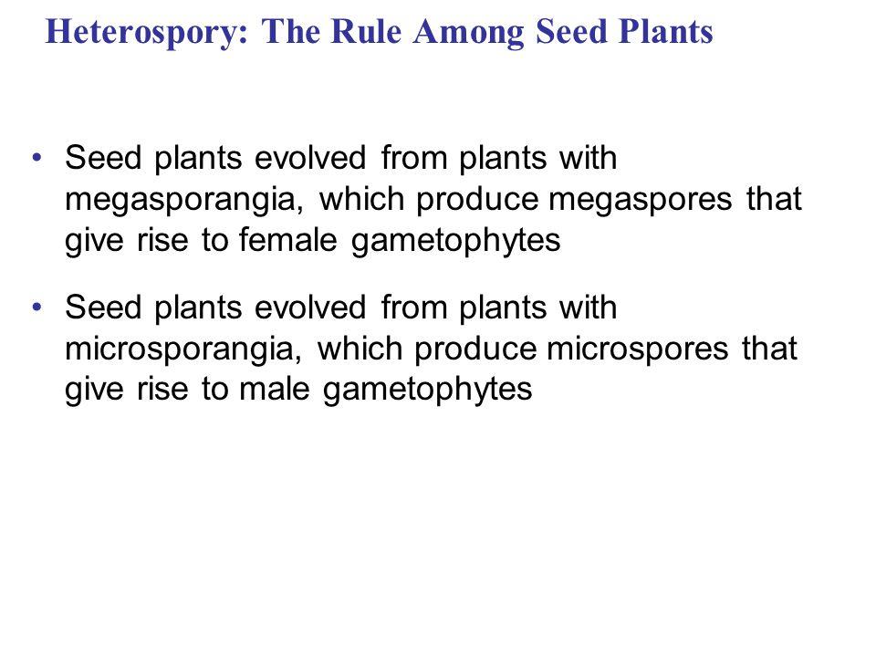 Heterospory: The Rule Among Seed Plants