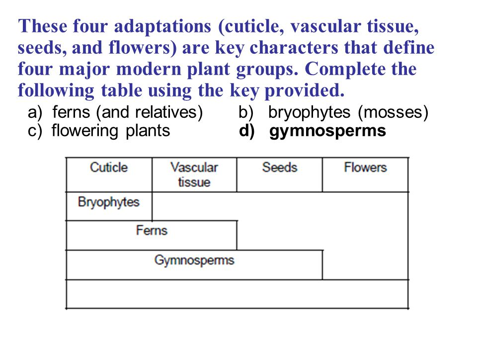 These four adaptations (cuticle, vascular tissue, seeds, and flowers) are key characters that define four major modern plant groups. Complete the following table using the key provided.
