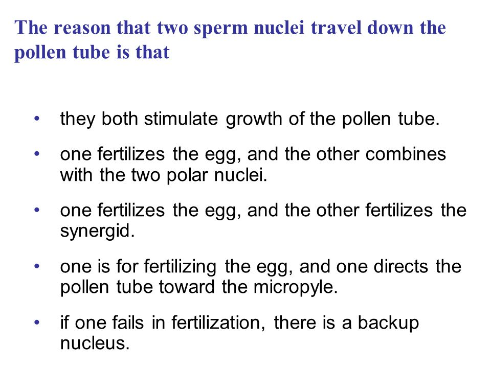 The reason that two sperm nuclei travel down the pollen tube is that