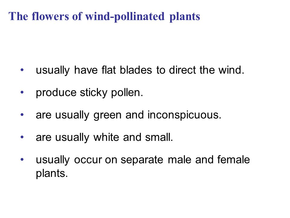 The flowers of wind-pollinated plants