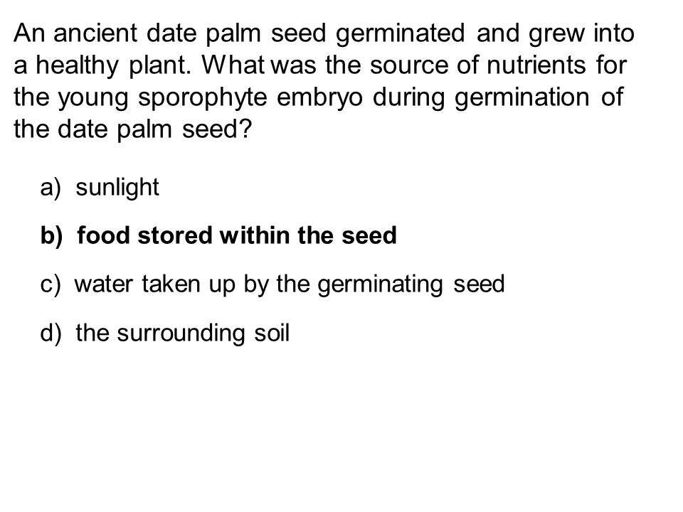 An ancient date palm seed germinated and grew into a healthy plant