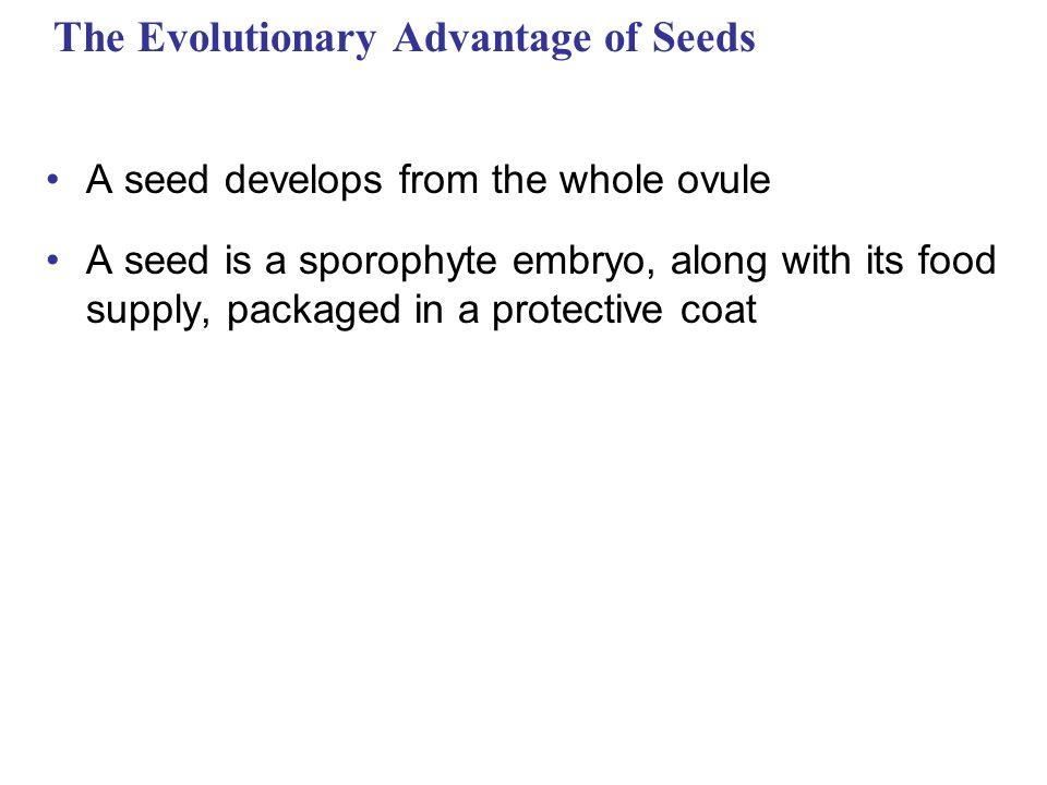 The Evolutionary Advantage of Seeds