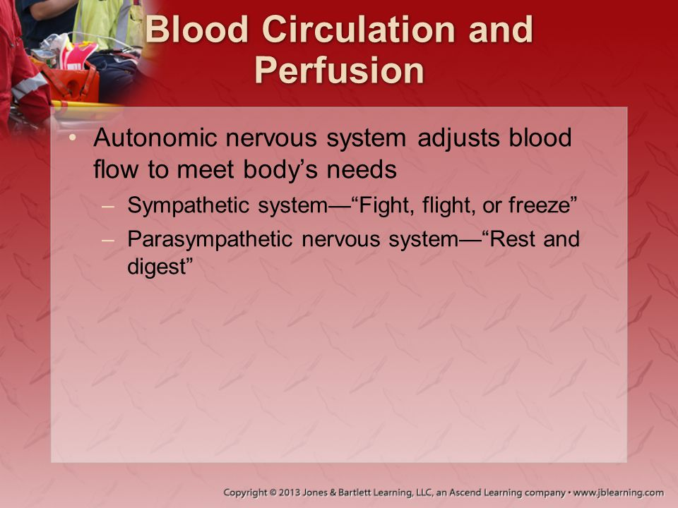 Blood Circulation and Perfusion