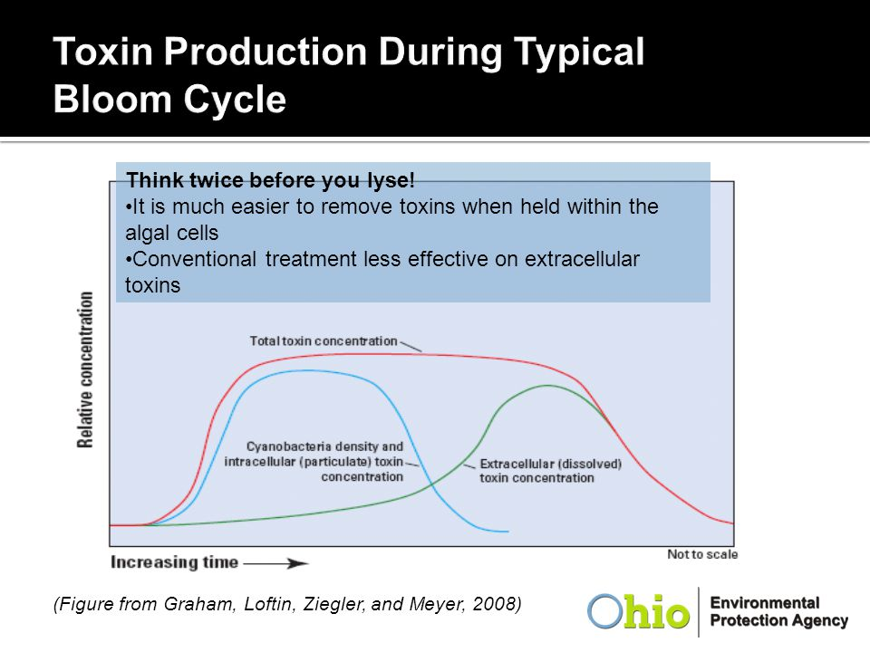 Toxin Production During Typical Bloom Cycle