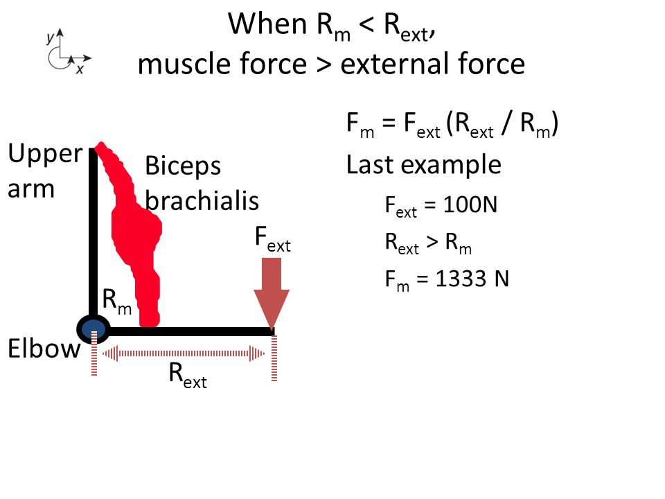 When Rm < Rext, muscle force > external force