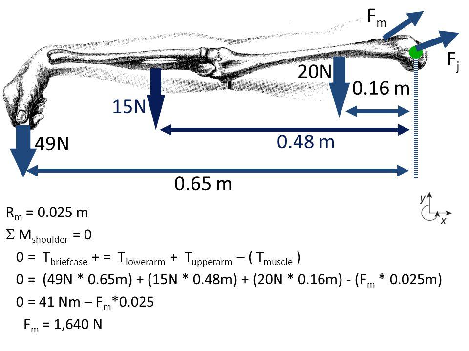 Fm Fj 20N 0.16 m 15N 0.48 m 49N 0.65 m Rm = 0.025 m  Mshoulder = 0