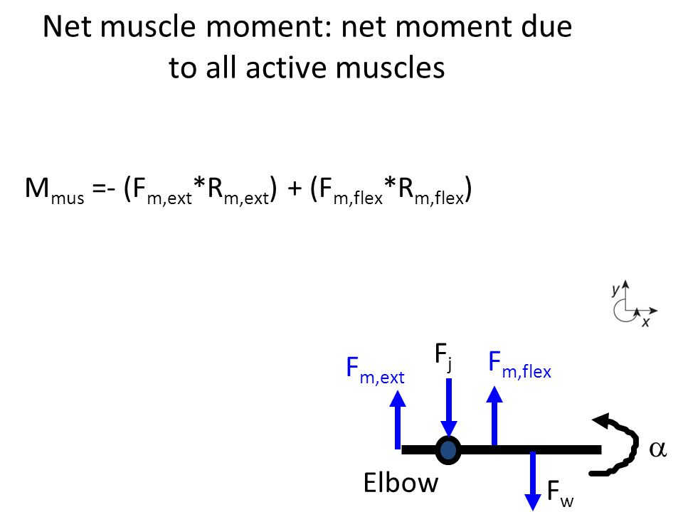 Net muscle moment: net moment due to all active muscles